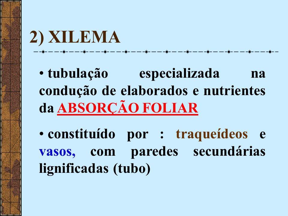 2) XILEMA tubulação especializada na condução de elaborados e nutrientes da ABSORÇÃO FOLIAR constituído por : traqueídeos e vasos, com paredes secundá