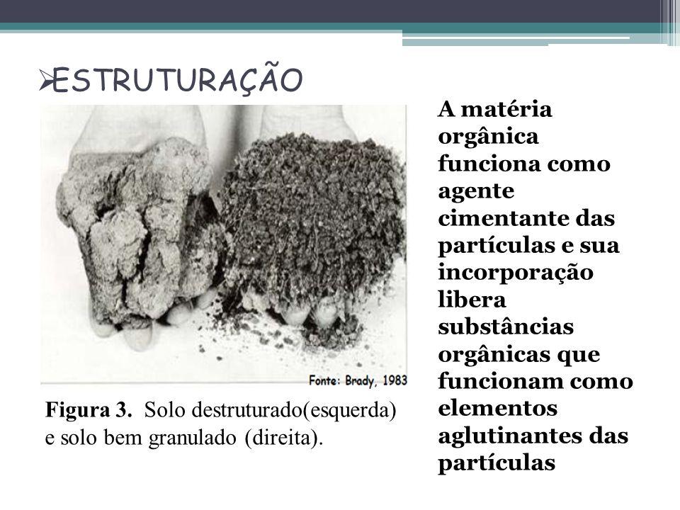 ESTRUTURAÇÃO Figura 3. Solo destruturado(esquerda) e solo bem granulado (direita). A matéria orgânica funciona como agente cimentante das partículas e