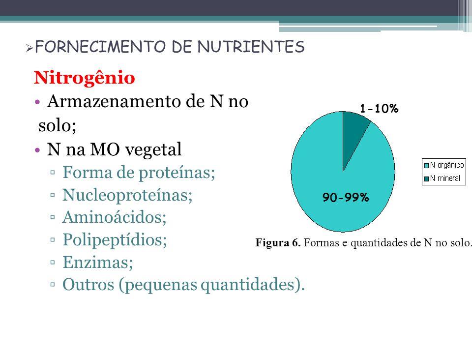 FORNECIMENTO DE NUTRIENTES Nitrogênio Armazenamento de N no solo; N na MO vegetal Forma de proteínas; Nucleoproteínas; Aminoácidos; Polipeptídios; Enz