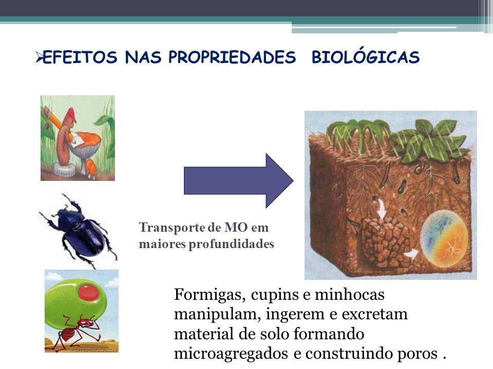Transporte de MO em maiores profundidades EFEITOS NAS PROPRIEDADES BIOLÓGICAS Formigas, cupins e minhocas manipulam, ingerem e excretam material de so