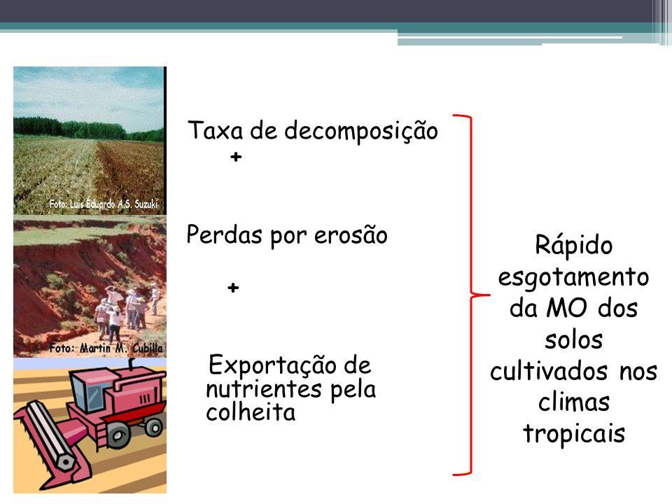 Taxa de decomposição + Perdas por erosão + Exportação de nutrientes pela colheita Rápido esgotamento da MO dos solos cultivados nos climas tropicais