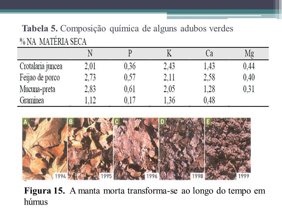Tabela 5. Composição química de alguns adubos verdes Figura 15. A manta morta transforma-se ao longo do tempo em húmus