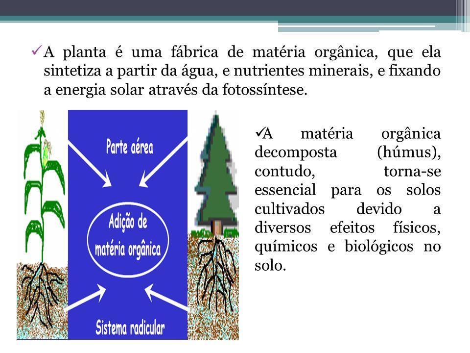 A planta é uma fábrica de matéria orgânica, que ela sintetiza a partir da água, e nutrientes minerais, e fixando a energia solar através da fotossínte