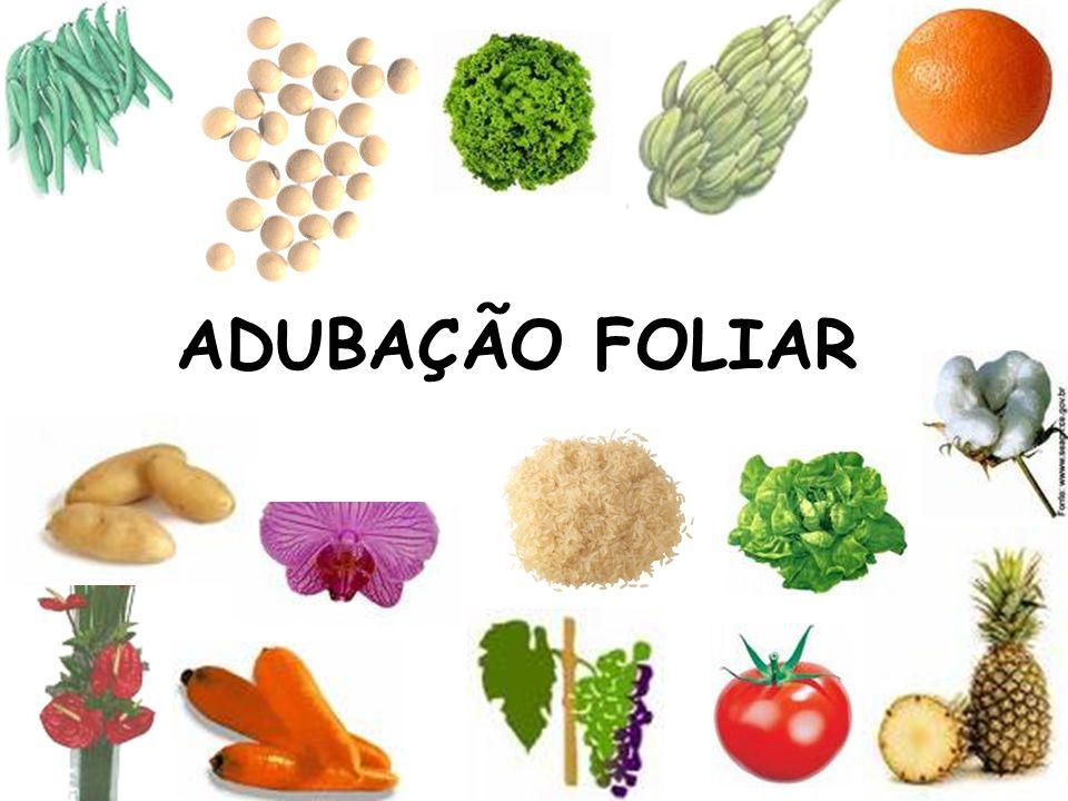 Adubação foliar dos Citros Amostragem: Frutos de 2 - 4 cm de diâmetro 3º ou 4º folha depois do fruto 40 folhas Fonte: Raij et al.