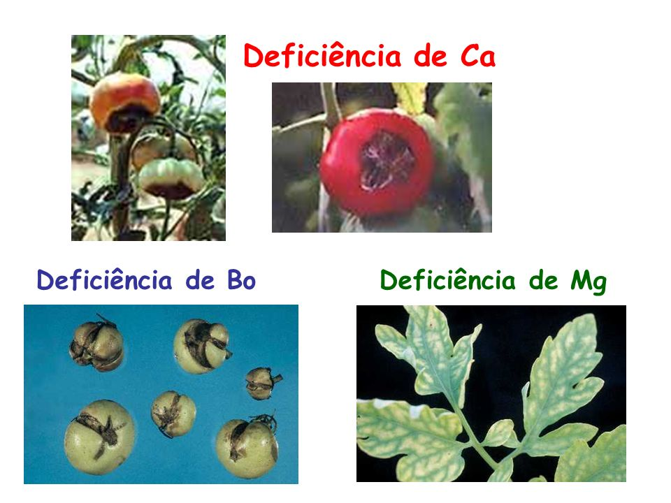 Deficiência de Ca Deficiência de BoDeficiência de Mg