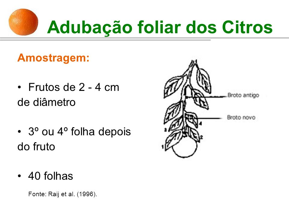 Adubação foliar dos Citros Amostragem: Frutos de 2 - 4 cm de diâmetro 3º ou 4º folha depois do fruto 40 folhas Fonte: Raij et al. (1996).