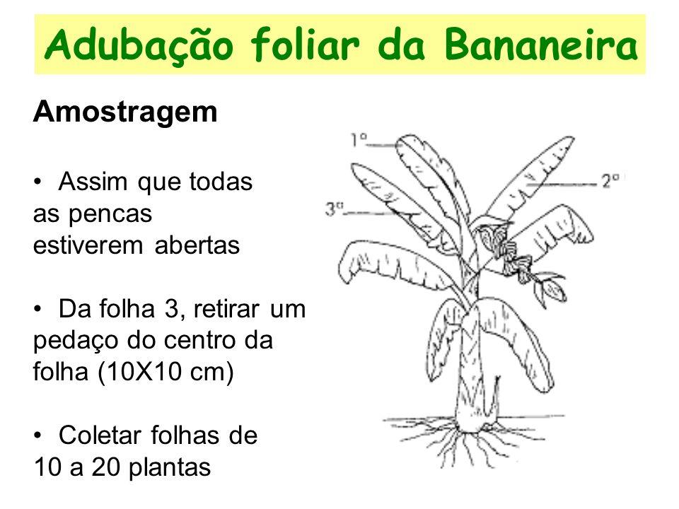 Adubação foliar da Bananeira Amostragem Assim que todas as pencas estiverem abertas Da folha 3, retirar um pedaço do centro da folha (10X10 cm) Coletar folhas de 10 a 20 plantas