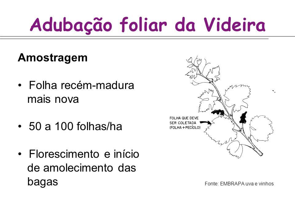 Adubação foliar da Videira Amostragem Folha recém-madura mais nova 50 a 100 folhas/ha Florescimento e início de amolecimento das bagas Fonte: EMBRAPA
