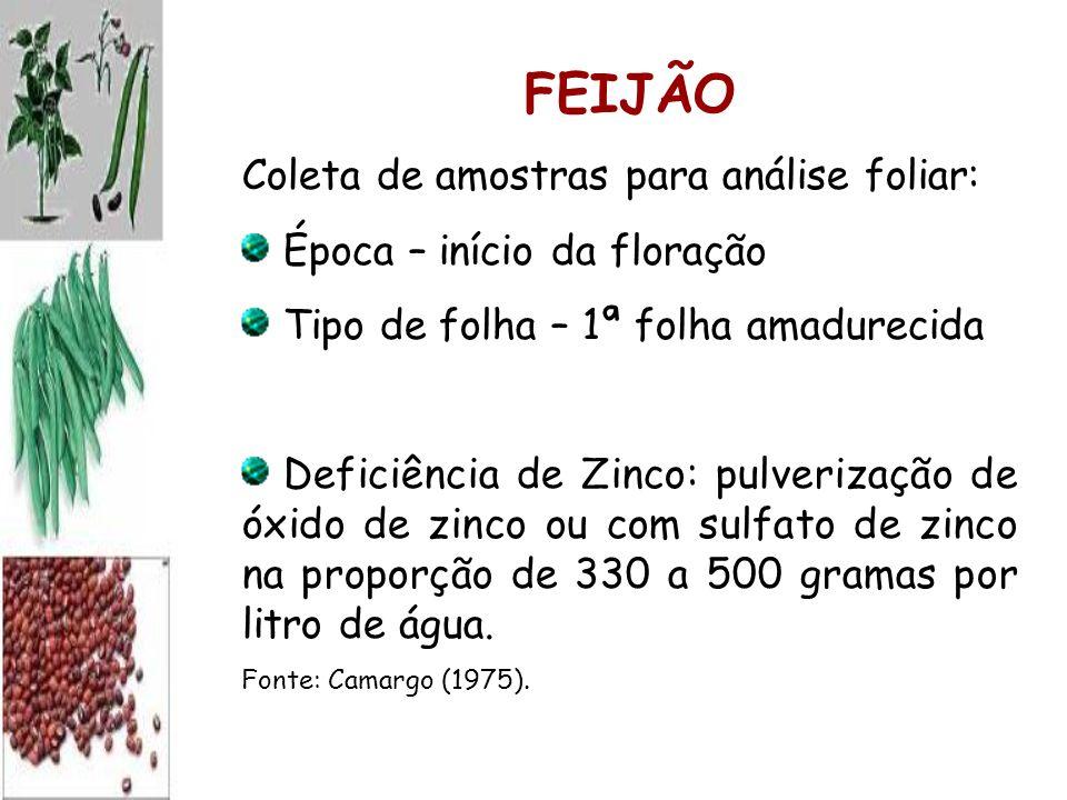 FEIJÃO Coleta de amostras para análise foliar: Época – início da floração Tipo de folha – 1ª folha amadurecida Deficiência de Zinco: pulverização de óxido de zinco ou com sulfato de zinco na proporção de 330 a 500 gramas por litro de água.