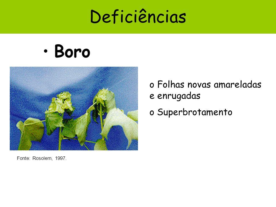 Boro Deficiências Fonte: Rosolem, 1997. o Folhas novas amareladas e enrugadas o Superbrotamento