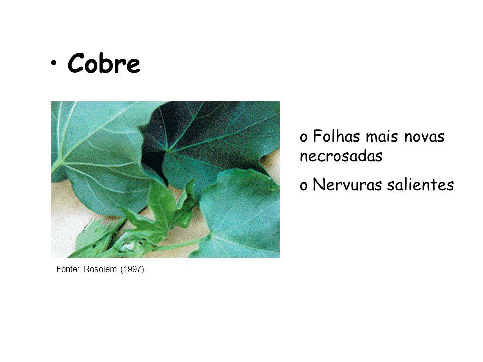 Cobre Fonte: Rosolem (1997). o Folhas mais novas necrosadas o Nervuras salientes