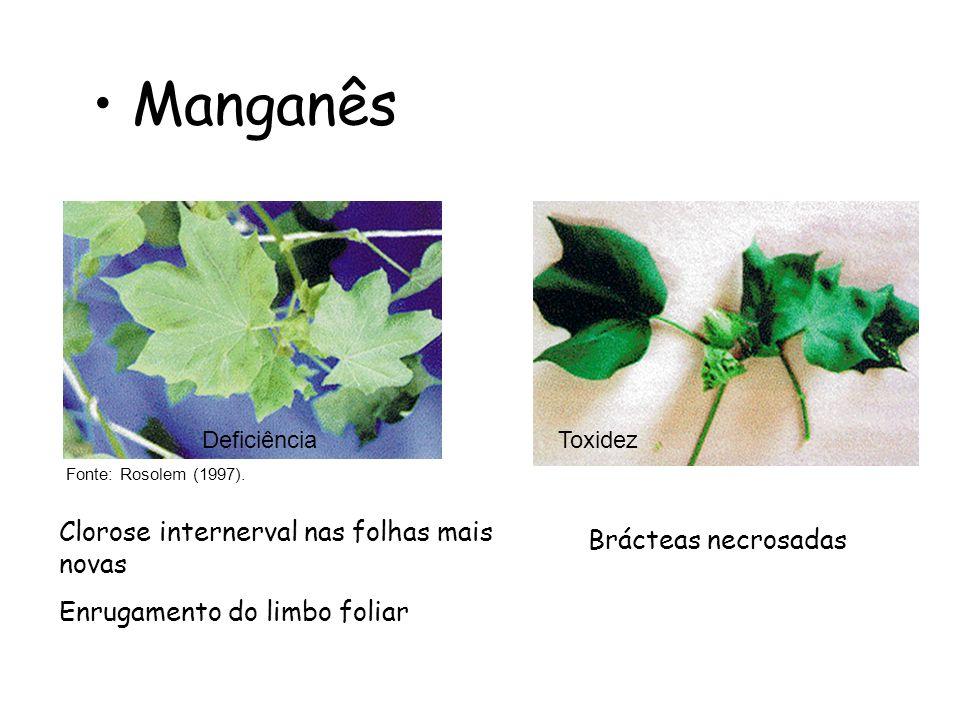Manganês DeficiênciaToxidez Fonte: Rosolem (1997). Clorose internerval nas folhas mais novas Enrugamento do limbo foliar Brácteas necrosadas