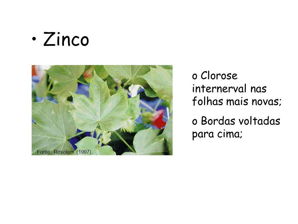 Zinco Fonte: Rosolem (1997). o Clorose internerval nas folhas mais novas; o Bordas voltadas para cima;