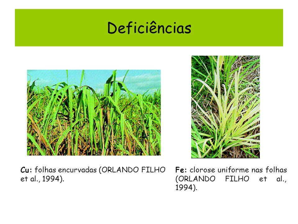 Deficiências Cu: folhas encurvadas (ORLANDO FILHO et al., 1994). Fe: clorose uniforme nas folhas (ORLANDO FILHO et al., 1994).