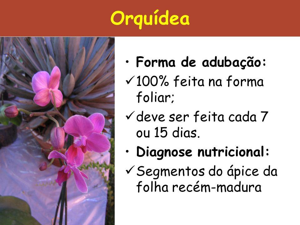 Orquídea Forma de adubação: 100% feita na forma foliar; deve ser feita cada 7 ou 15 dias. Diagnose nutricional: Segmentos do ápice da folha recém-madu