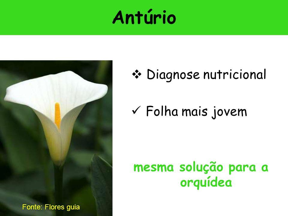Antúrio Diagnose nutricional Folha mais jovem mesma solução para a orquídea Fonte: Flores guia
