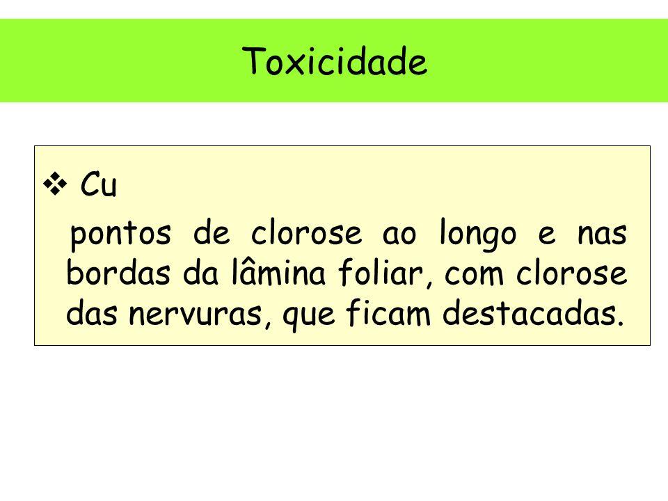 Toxicidade Cu pontos de clorose ao longo e nas bordas da lâmina foliar, com clorose das nervuras, que ficam destacadas.
