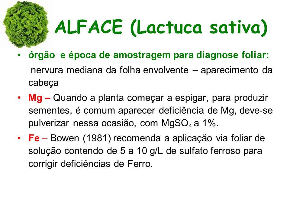 ALFACE (Lactuca sativa) órgão e época de amostragem para diagnose foliar: nervura mediana da folha envolvente – aparecimento da cabeça Mg – Quando a p