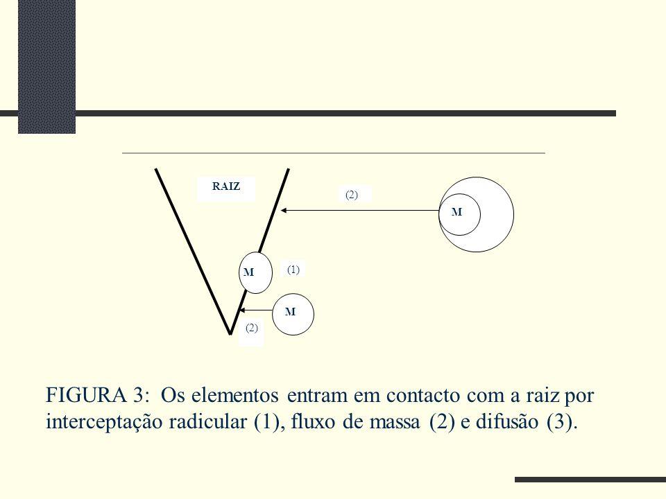 RAIZ M H2OH2O M M (2) (1) (2) FIGURA 3: Os elementos entram em contacto com a raiz por interceptação radicular (1), fluxo de massa (2) e difusão (3).