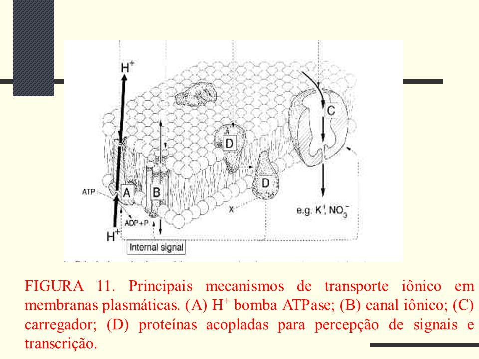 FIGURA 11. Principais mecanismos de transporte iônico em membranas plasmáticas. (A) H + bomba ATPase; (B) canal iônico; (C) carregador; (D) proteínas