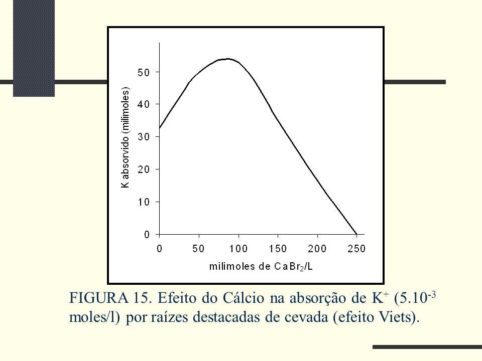 FIGURA 15. Efeito do Cálcio na absorção de K + (5.10 -3 moles/l) por raízes destacadas de cevada (efeito Viets).