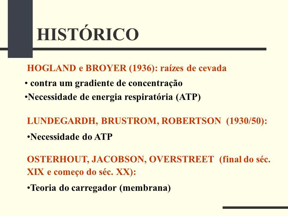 HISTÓRICO HOGLAND e BROYER (1936): raízes de cevada contra um gradiente de concentração Necessidade de energia respiratória (ATP) LUNDEGARDH, BRUSTROM