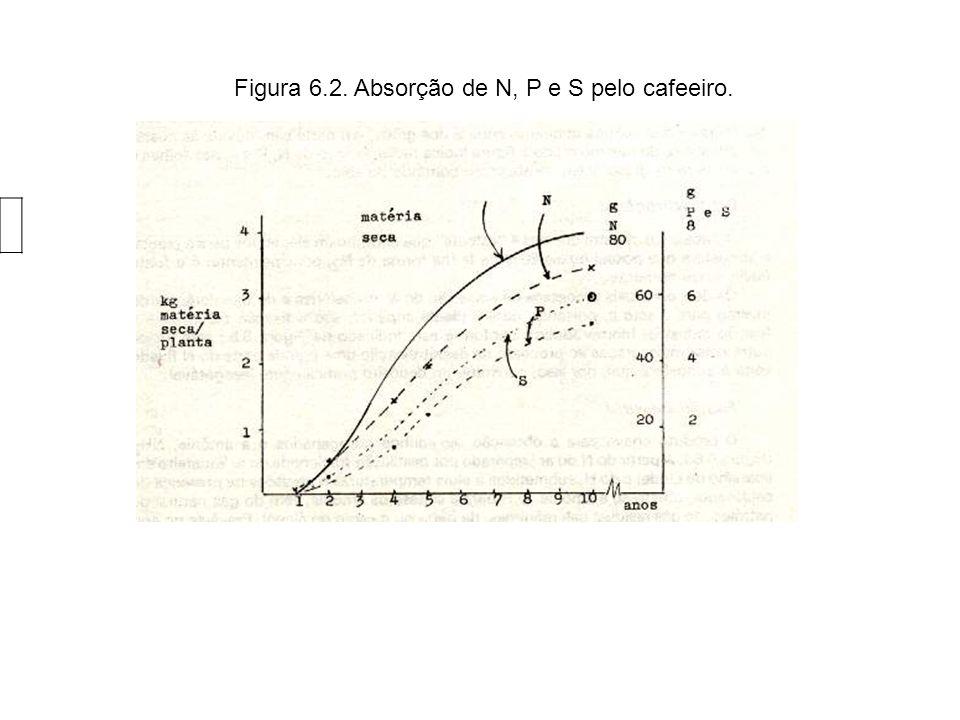 Figura 6.28. Absorção de K, Ca e Mg pelo milho.