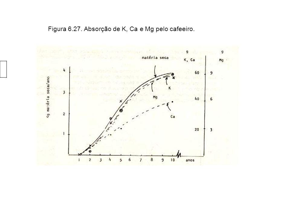 Figura 6.2. Absorção de N, P e S pelo cafeeiro.