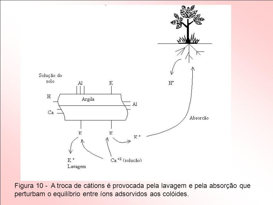 Figura 10 - A troca de cátions é provocada pela lavagem e pela absorção que perturbam o equilíbrio entre íons adsorvidos aos colóides.