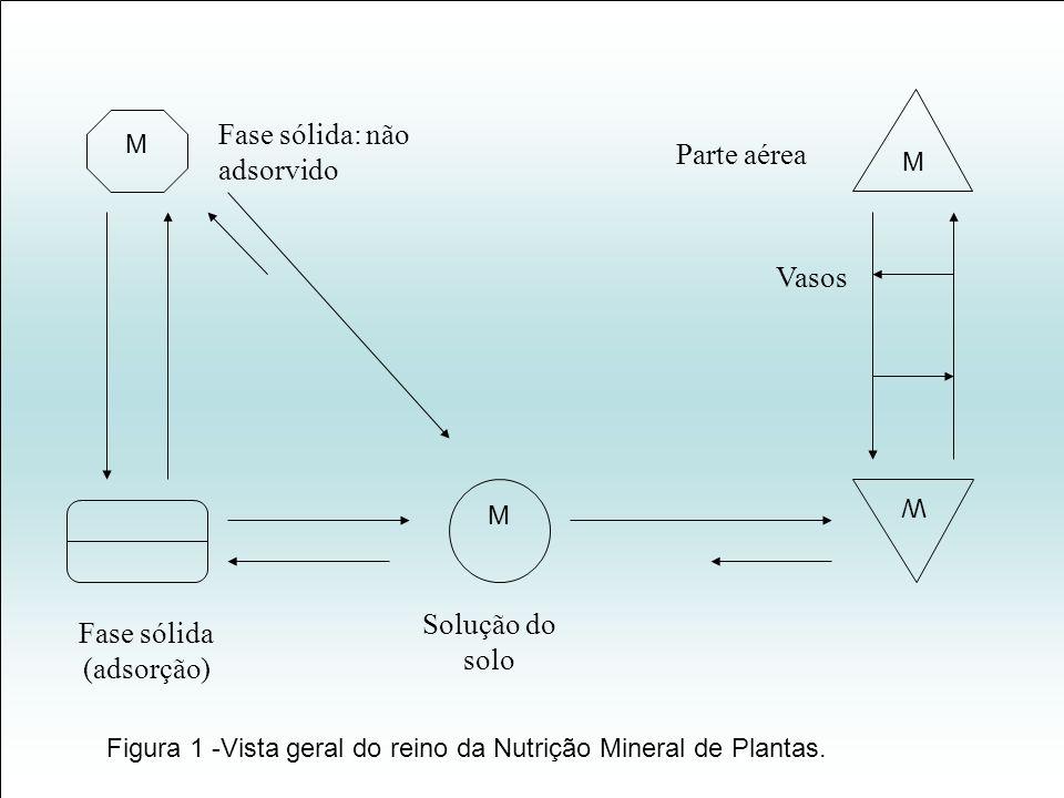 M M W M Fase sólida: não adsorvido Fase sólida (adsorção) Solução do solo Parte aérea Vasos Figura 1 -Vista geral do reino da Nutrição Mineral de Plan