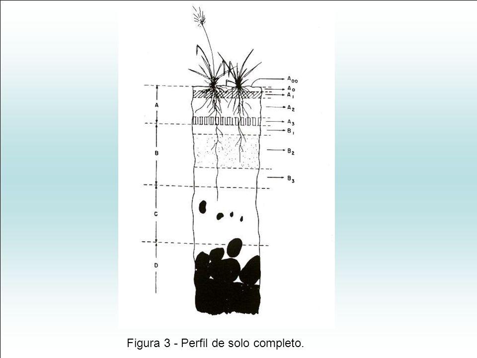 Figura 3 - Perfil de solo completo.