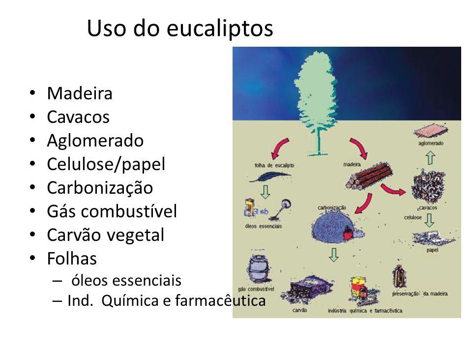 Uso do eucaliptos Madeira Cavacos Aglomerado Celulose/papel Carbonização Gás combustível Carvão vegetal Folhas – óleos essenciais – Ind. Química e far