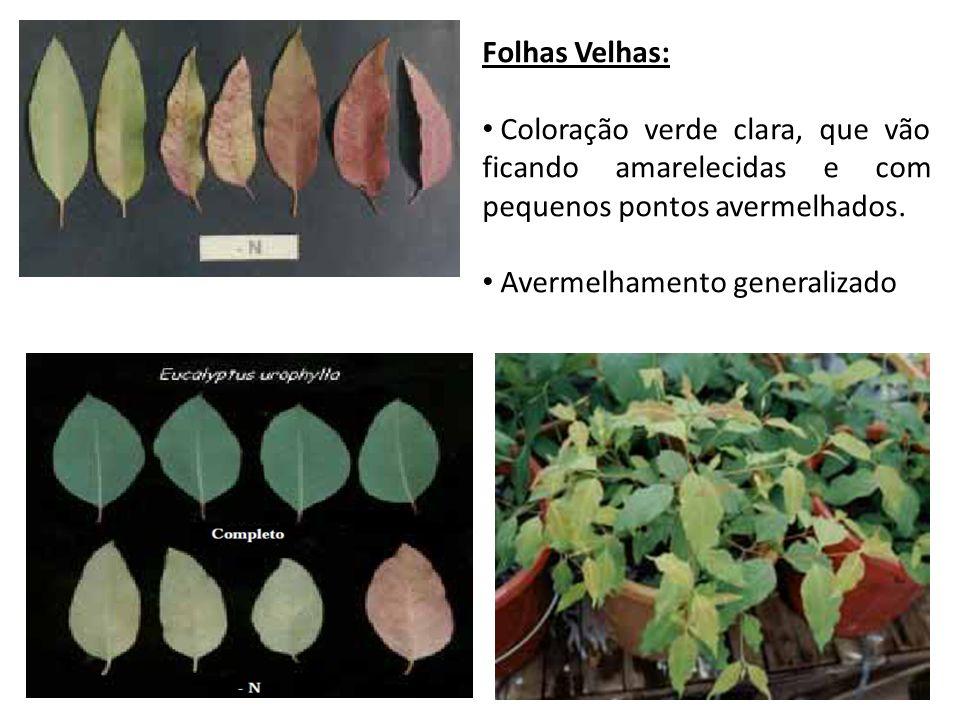 Folhas Velhas: Coloração verde clara, que vão ficando amarelecidas e com pequenos pontos avermelhados. Avermelhamento generalizado