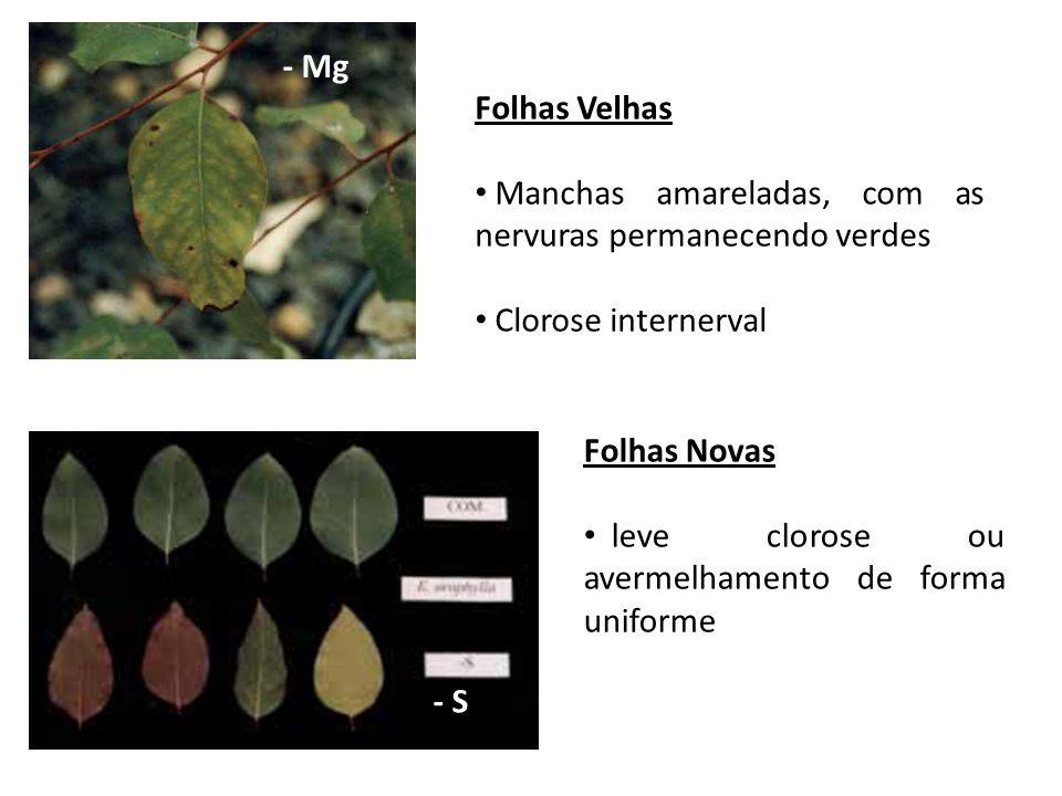 - Mg Folhas Velhas Manchas amareladas, com as nervuras permanecendo verdes Clorose internerval Folhas Novas leve clorose ou avermelhamento de forma un