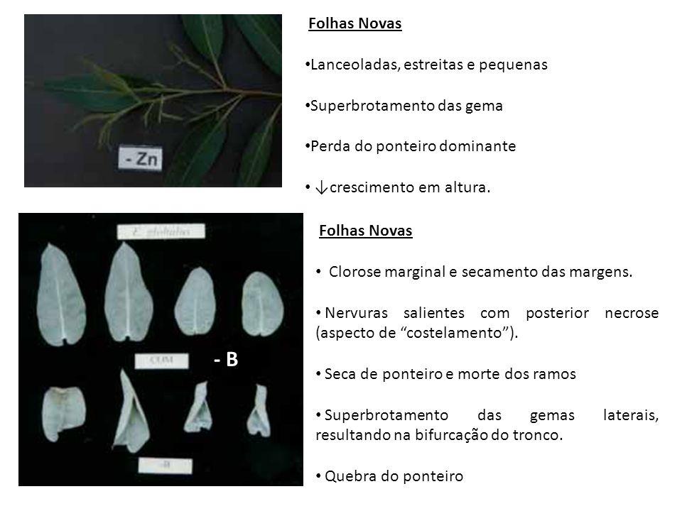 Folhas Novas Clorose marginal e secamento das margens. Nervuras salientes com posterior necrose (aspecto de costelamento). Seca de ponteiro e morte do