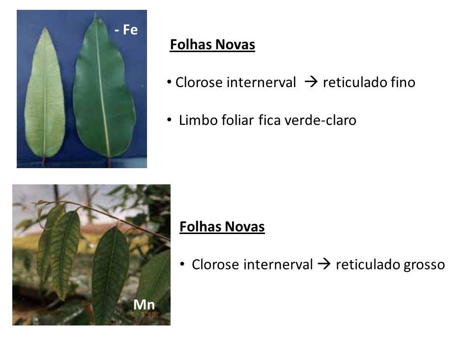 - Fe Mn Folhas Novas Clorose internerval reticulado grosso Folhas Novas Clorose internerval reticulado fino Limbo foliar fica verde-claro