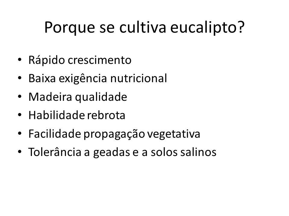 Porque se cultiva eucalipto? Rápido crescimento Baixa exigência nutricional Madeira qualidade Habilidade rebrota Facilidade propagação vegetativa Tole