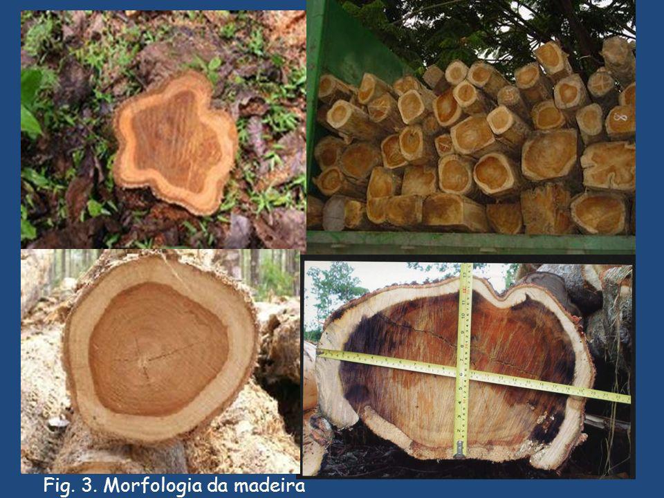 Fig. 3. Morfologia da madeira