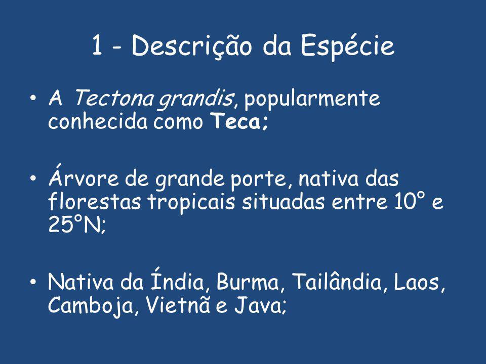 1 - Descrição da Espécie A Tectona grandis, popularmente conhecida como Teca; Árvore de grande porte, nativa das florestas tropicais situadas entre 10° e 25°N; Nativa da Índia, Burma, Tailândia, Laos, Camboja, Vietnã e Java;