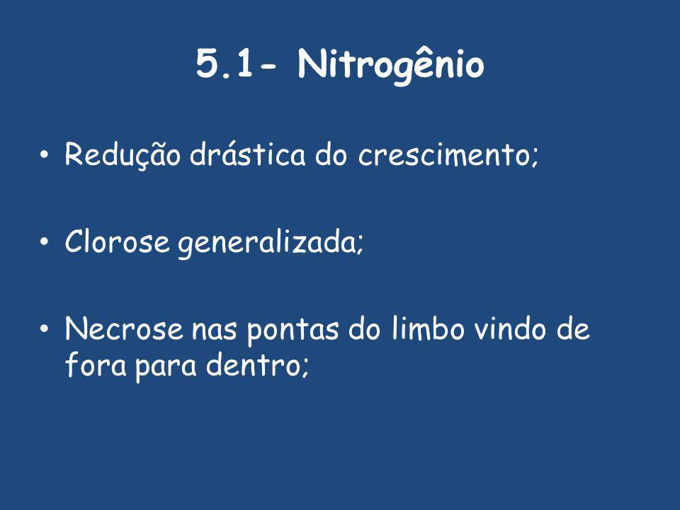 5.1- Nitrogênio Redução drástica do crescimento; Clorose generalizada; Necrose nas pontas do limbo vindo de fora para dentro;