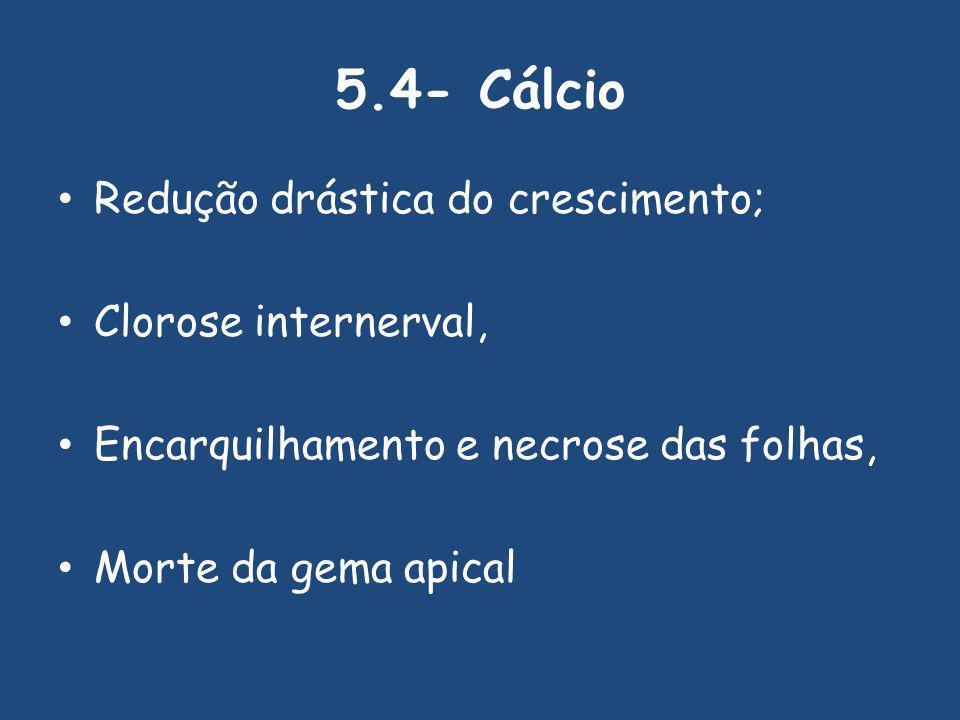 5.4- Cálcio Redução drástica do crescimento; Clorose internerval, Encarquilhamento e necrose das folhas, Morte da gema apical