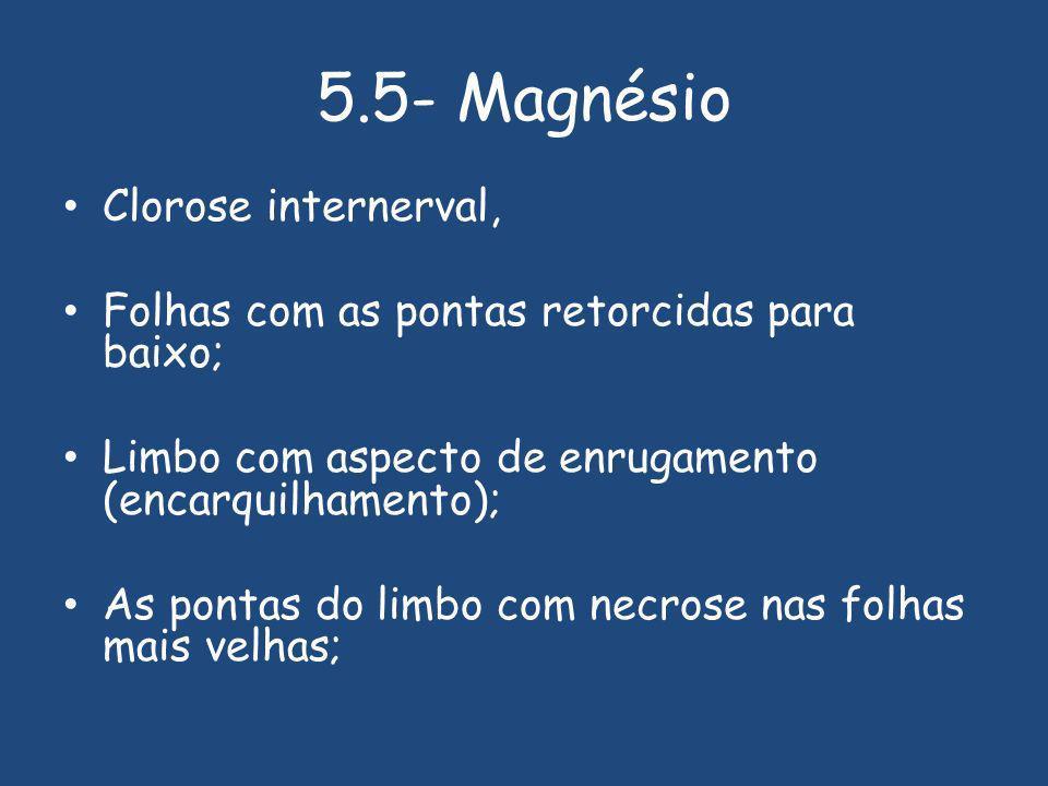 5.5- Magnésio Clorose internerval, Folhas com as pontas retorcidas para baixo; Limbo com aspecto de enrugamento (encarquilhamento); As pontas do limbo com necrose nas folhas mais velhas;