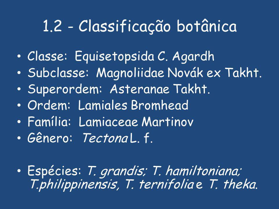 1.2 - Classificação botânica Classe: Equisetopsida C.