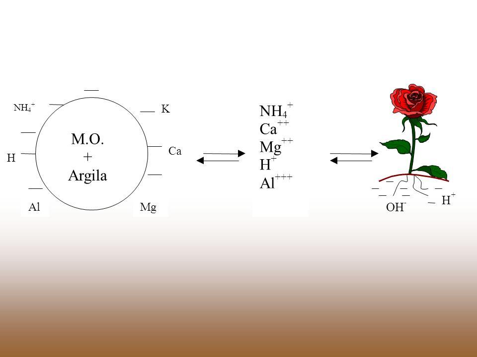 M.O. + Argila NH 4 + H Al K Ca Mg NH 4 + Ca ++ Mg ++ H + Al +++ OH - H +