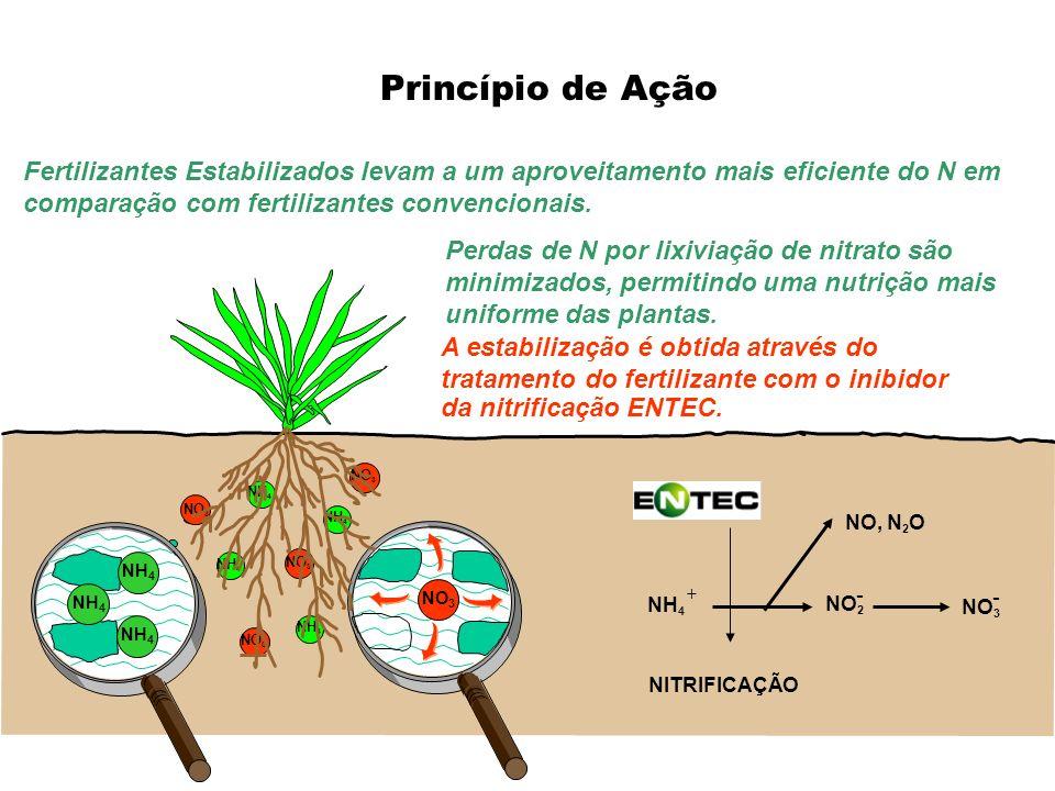 Princípio de Ação NITRIFICAÇÃO NO 2 NO, N 2 O NO 3 - + - NH 4 NO 3 NH 4 NO 3 NH 4 NO 3 NH 4 Fertilizantes Estabilizados levam a um aproveitamento mais
