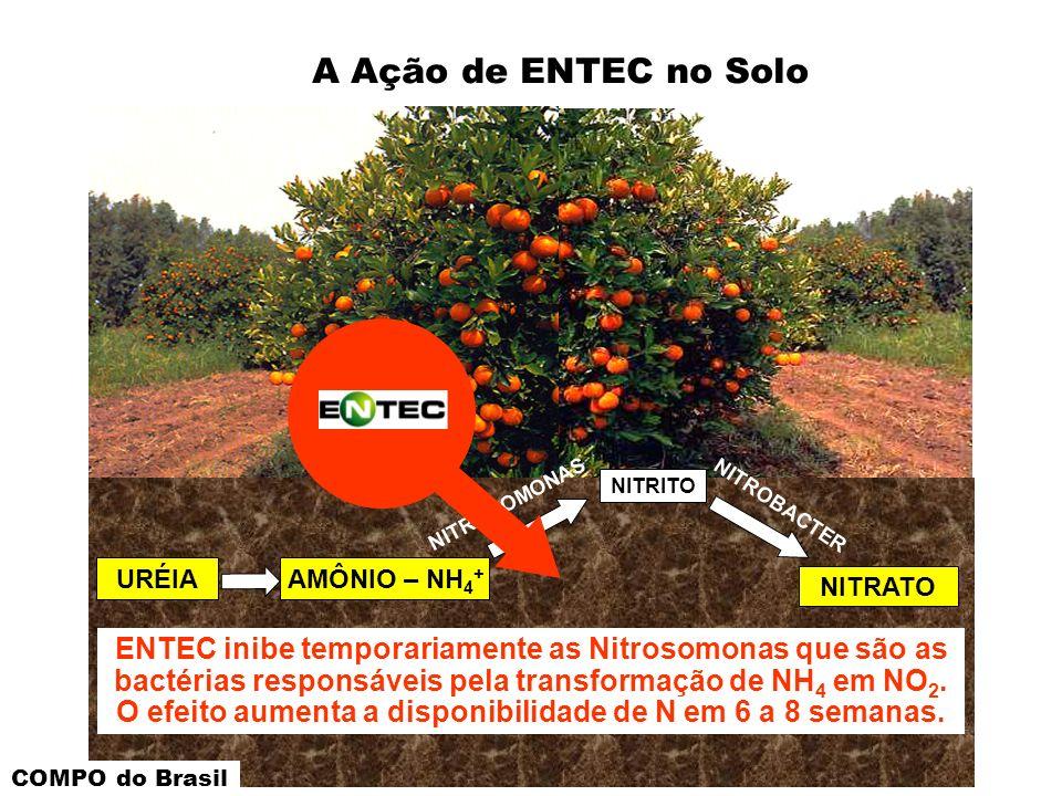 NITRITO NITROSOMONAS NITROBACTER URÉIAAMÔNIO – NH 4 + NITRATO A Ação de ENTEC no Solo ENTEC inibe temporariamente as Nitrosomonas que são as bactérias