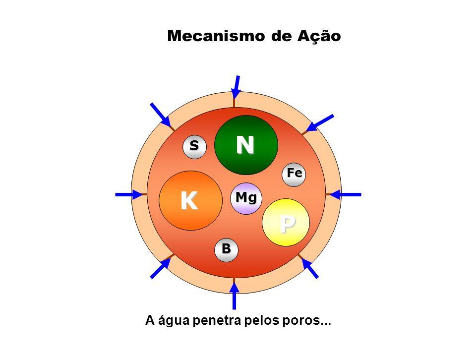 K N P Mg B Fe S A água penetra pelos poros... Mecanismo de Ação