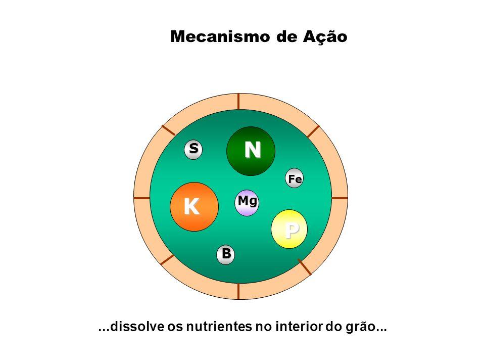 K N P Mg Mg B Fe S...dissolve os nutrientes no interior do grão... Mecanismo de Ação