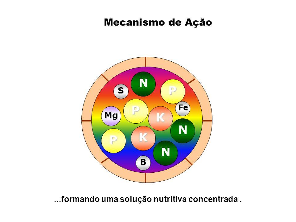 ...formando uma solução nutritiva concentrada. Mg B Fe S N N N P P P K K Mecanismo de Ação