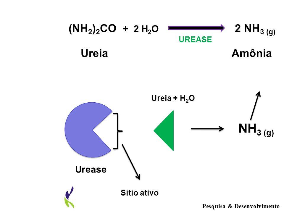 Pesquisa & Desenvolvimento UREASE Urease Sítio ativo Ureia + H 2 O NH 3 (g) (NH 2 ) 2 CO + 2 H 2 O 2 NH 3 (g) Ureia Amônia